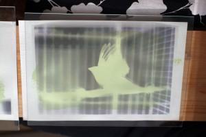 Feuille + négatif + plaque de verre