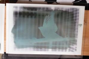 Cyanotype au soleil