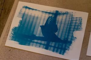 Cyanotype terminé