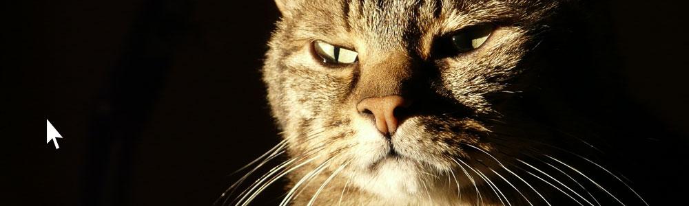Les chats aiment les souris